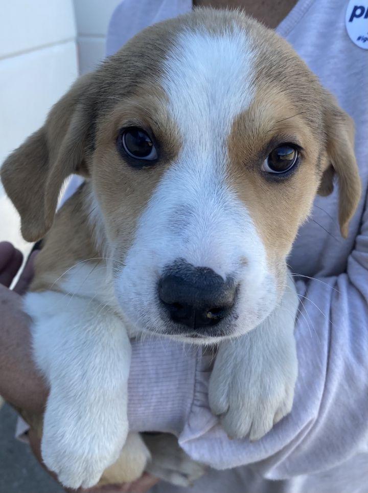 John Denver Pups 2021-064-068 5