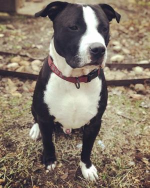Panda is a high energy pup that loves to cuddle He has been a very good running buddy He will