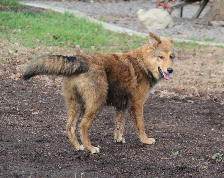 Foxy 5