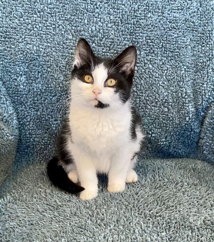 Catsy Cline 1