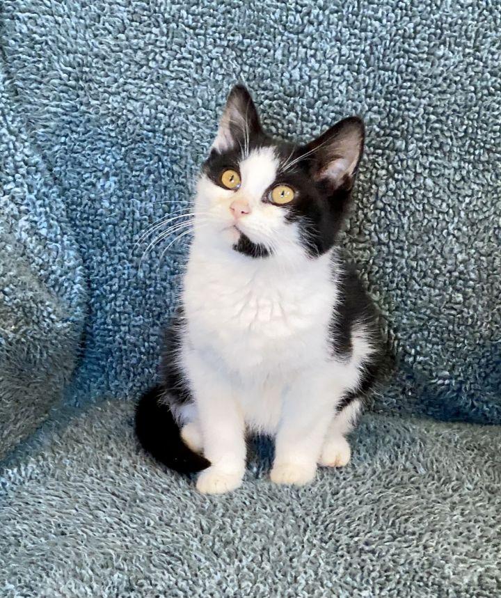Catsy Cline 3