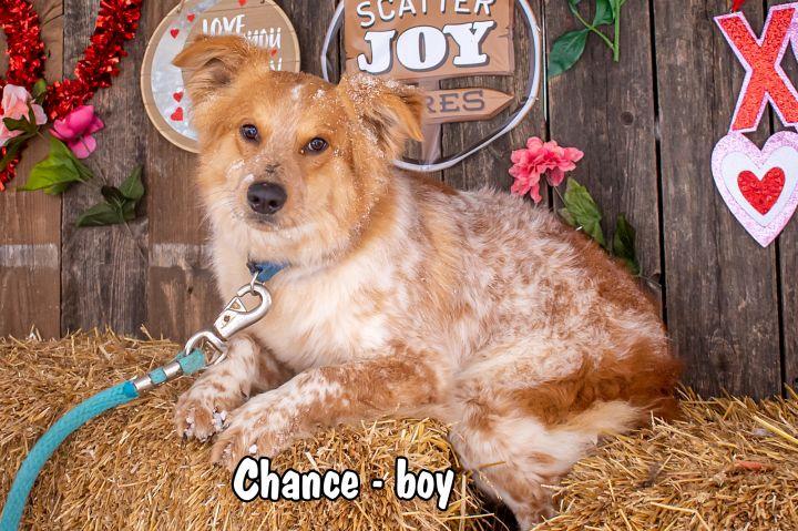 Chance 1
