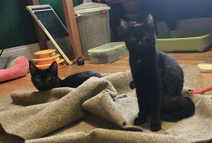 Rhett and Scarlett 1