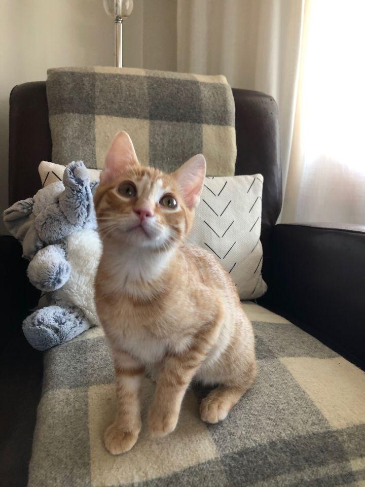 Gumball - Pending Adoption 2