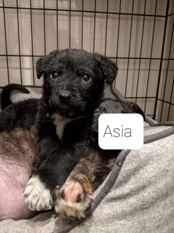 Asia 2