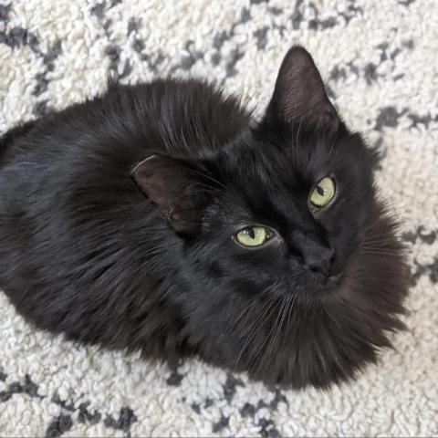 ELECTRA - BONDED TO WHITE WHISKER