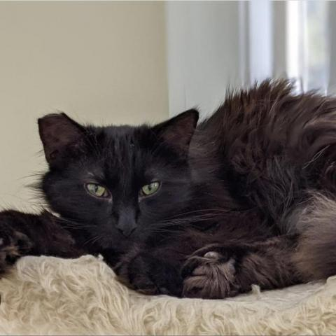 ELECTRA - BONDED TO WHITE WHISKER 6