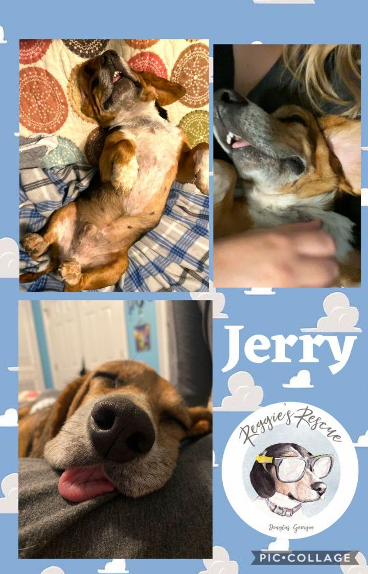 Jerry 3