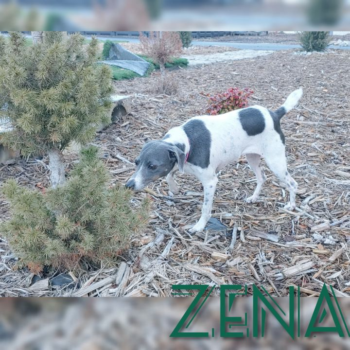 Zena 2