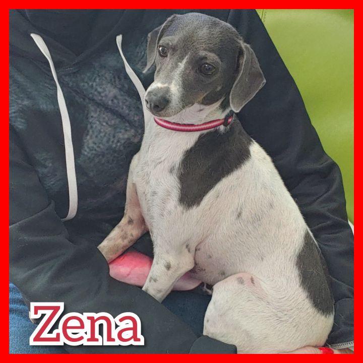 Zena 3