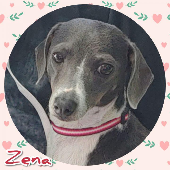 Zena 1