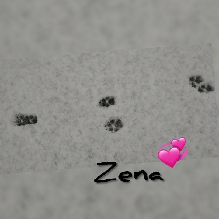 Zena 5