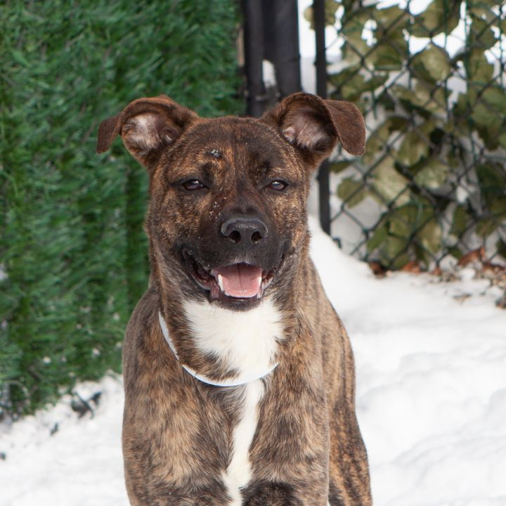 JD, an adopted Mixed Breed in Ridgefield, CT_image-2