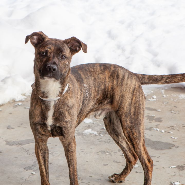 JD, an adopted Mixed Breed in Ridgefield, CT_image-3