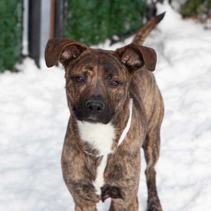 JD, an adopted Mixed Breed in Ridgefield, CT_image-4