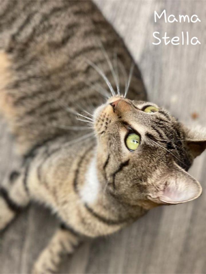 Mama Stella 2