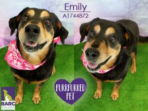 Emily is enjoying some time in Foster Care If you are interested in meeting this kiddo please e-ma
