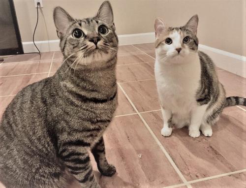 Stanlee & Stella 1