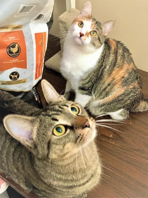 Stanlee & Stella 2