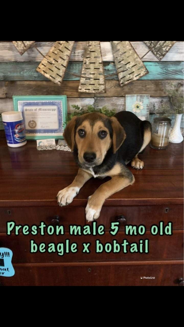 Preston 1