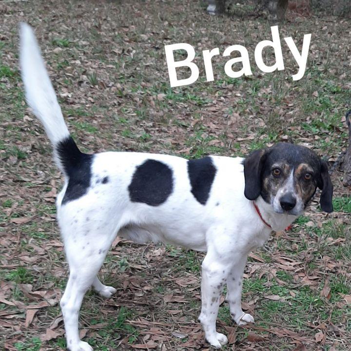 Brady 2