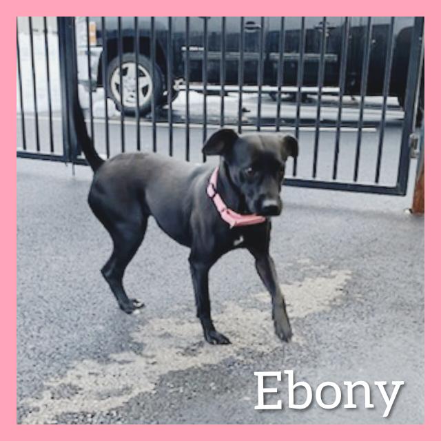 Ebony 2