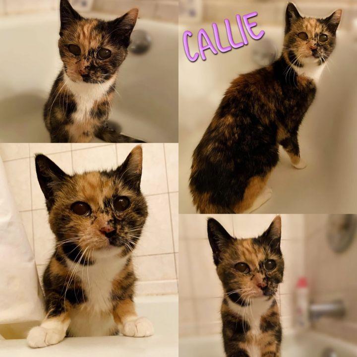 Callie 2