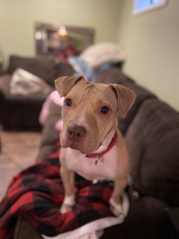 Rosie 1