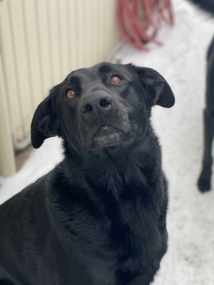Sweet girl that loves to cuddle and play She needs basic training but is very treat motivated and e