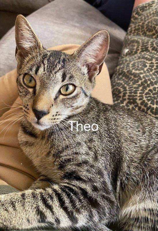 Theo 1