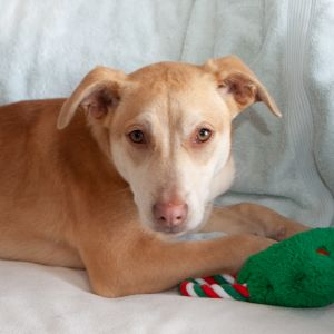 DOB 72520 This sweet girl was found wandering in SC with two other dogs She