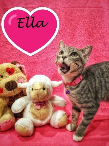 Ella C3573
