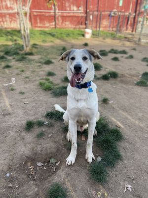 Freddie is an amazingly sweet energetic and happy boy who is around 1 years old and is looking for