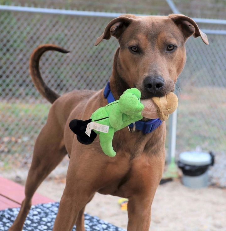 Prince, an adoptable Mixed Breed in Athens, GA