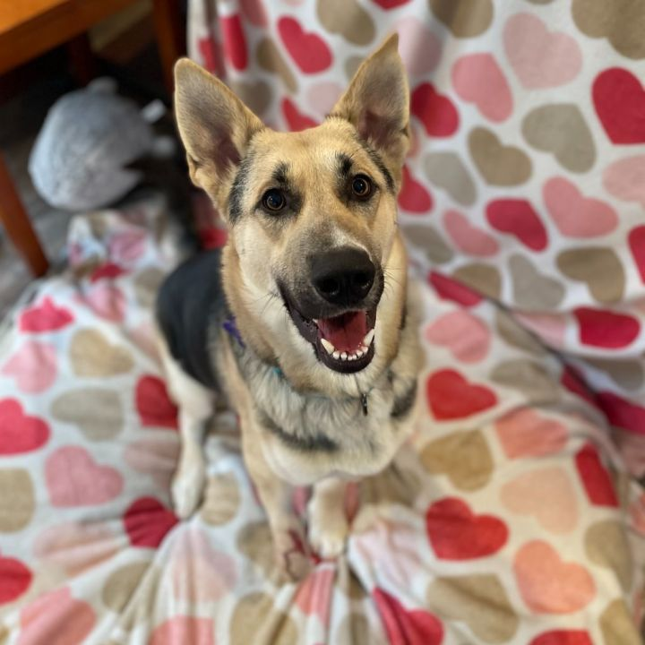 Marley, an adopted Mixed Breed in Hopkinton, MA