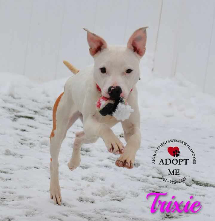 Trixie 5