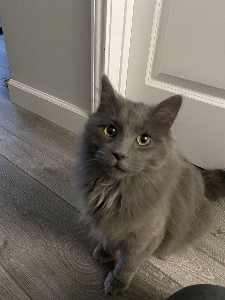Sergey - Pending Adoption 1