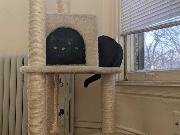 Buster & Tommie (Bonded Pair) - Pending Adoption 1