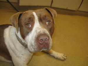 SNICKERS - ID#A402402