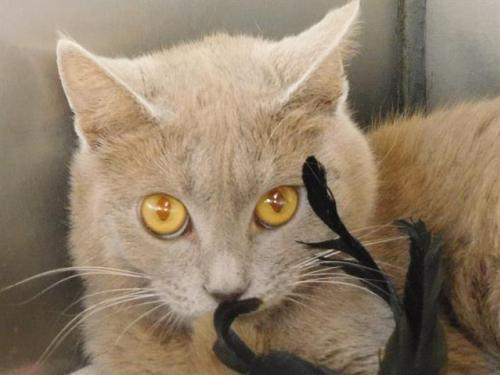 CHER - ID#A401440 1