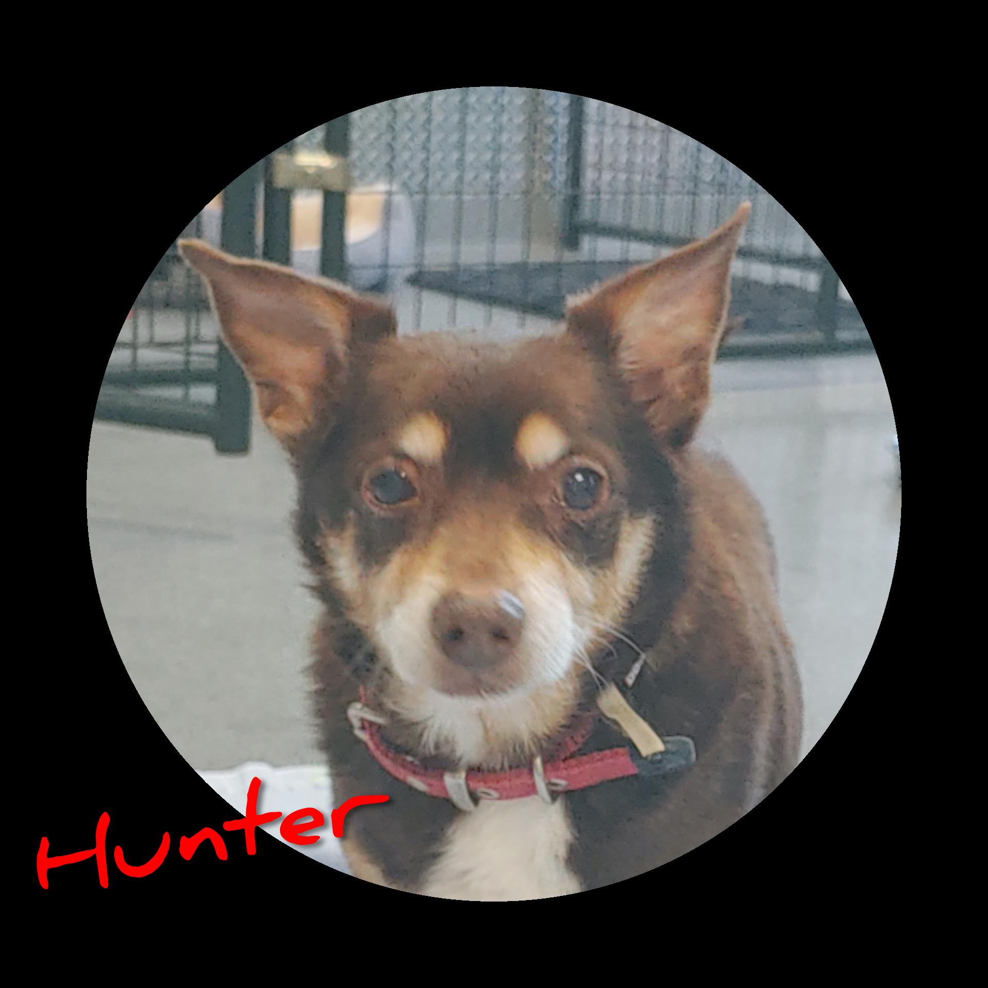 Hunter detail page