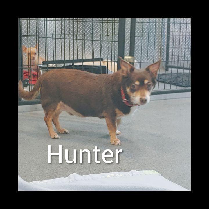 Hunter 3