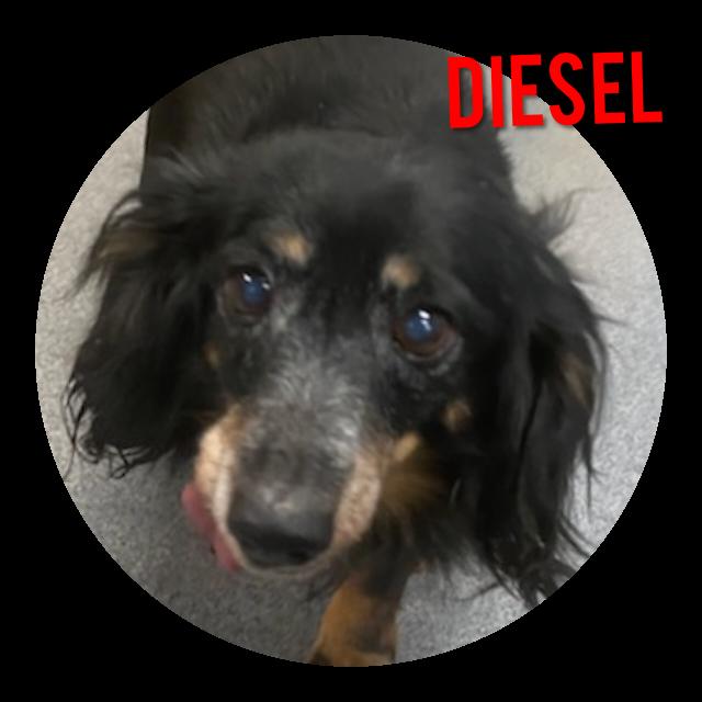 Diesel detail page