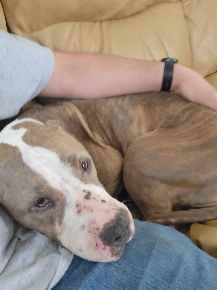 Sweetie ~ FOSTER HOME REQUEST 2