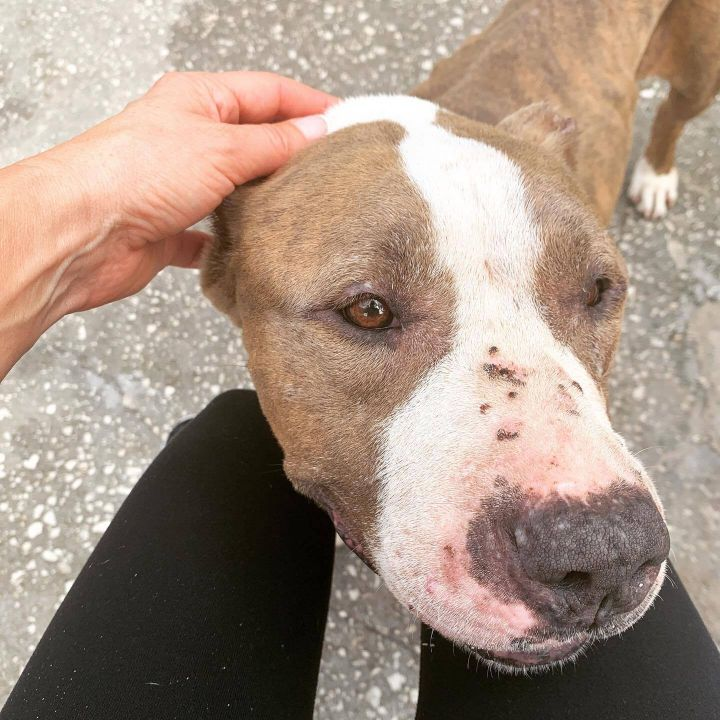 Sweetie ~ FOSTER HOME REQUEST 1