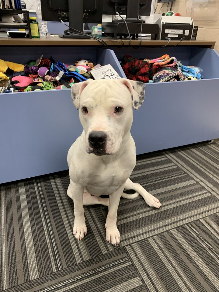 Boss, an adopted Mixed Breed in Aurora, IL