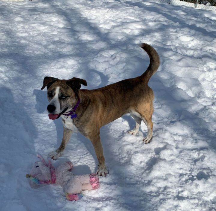 Ino, an adopted Mixed Breed in Hopkinton, MA_image-4