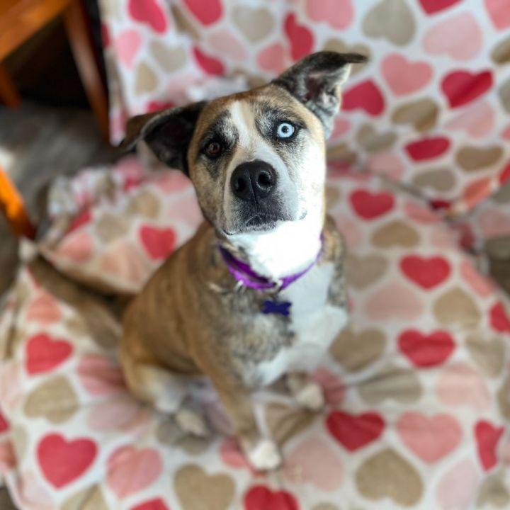 Ino, an adopted Mixed Breed in Hopkinton, MA_image-5