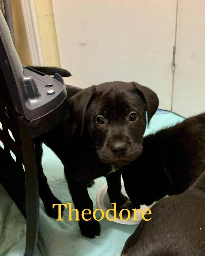 Theodore 1