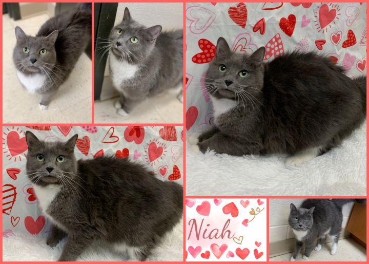 Niah 1